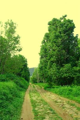 Anniversary Trip : Lereng Gunung Ungaran-Curug Benowo-Curug Lawe (Part 1)