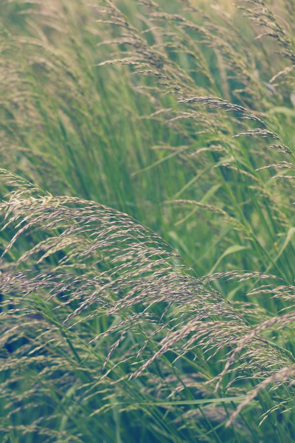 Ackermomente, Acker, Fleurcoquet, Ackerhelden, eigene Ernte, Ernte, ernten