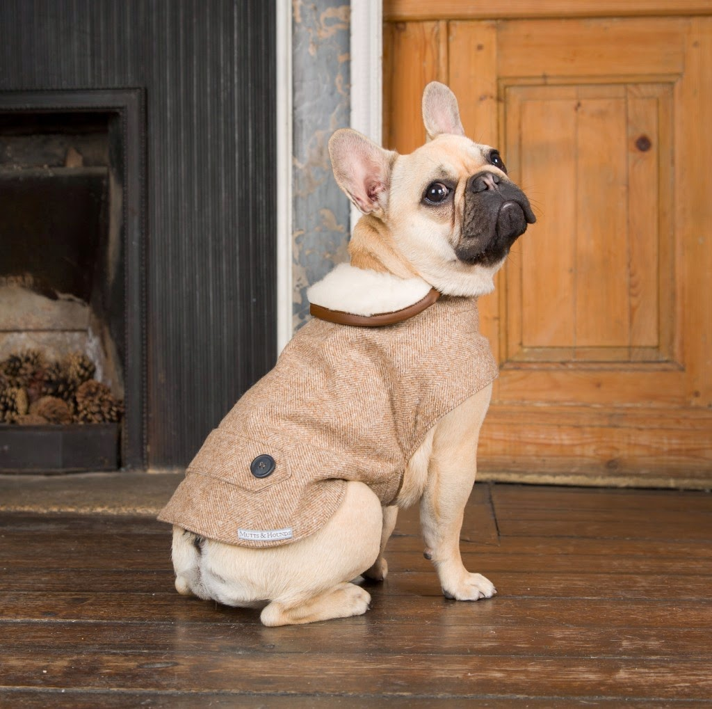 Find Simply Dog Pet Clothes