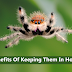 Reasons Why You Shouldn't Kill spiders And Keep Them In Home
