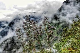 Neelakurinji Blooming 2018