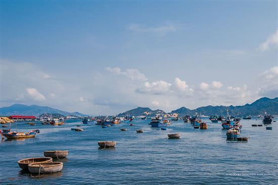 khai thác đánh bắt bào ngư ở Nha Trang Khánh Hoà