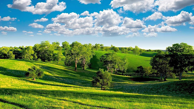green meadows peace of mind wallpapers tranquil
