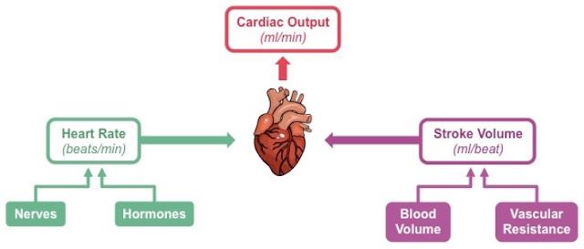 Menghitung Cardioc Outpot Terhadap Penurunan Curah Jantung