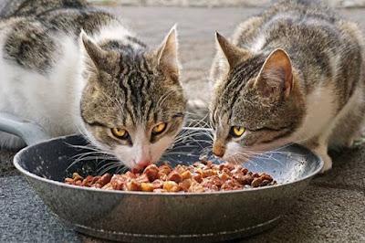 11 Makanan Yang Tidak Boleh Untuk Kucing & Makanan Berbahaya Untuk Kucing