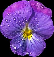 Flor lilás png