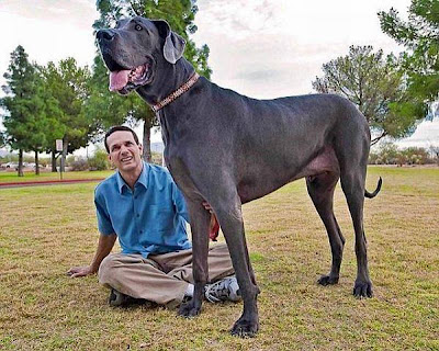 Gsv Pics - Photos with Poetry: Worlds Biggest DOGS ... - photo#17