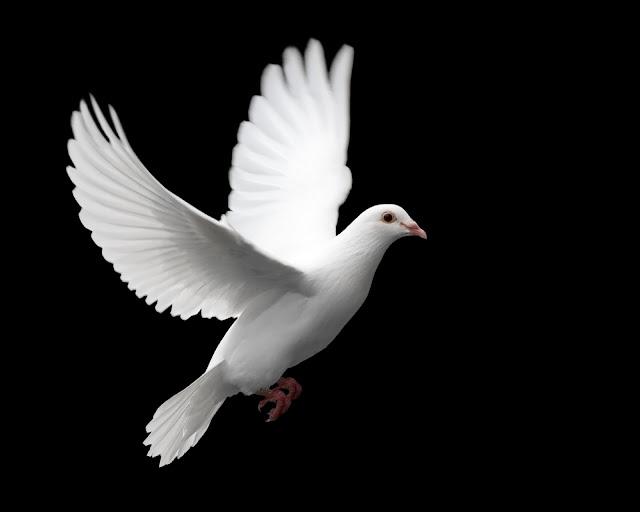 O Espírito Santo é o presente vivo de Deus
