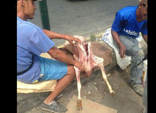 En Propatria los indigentes se comen a los perros de la calle
