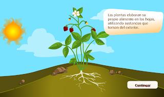 http://www.primerodecarlos.com/TERCERO_PRIMARIA/noviembre/Unidad4/actividades/cono/elaboracion_alimento/frame_prim.swf