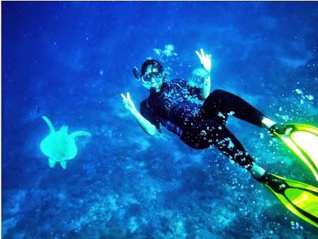 Menemukan seekor penyu berenang di dasar laut
