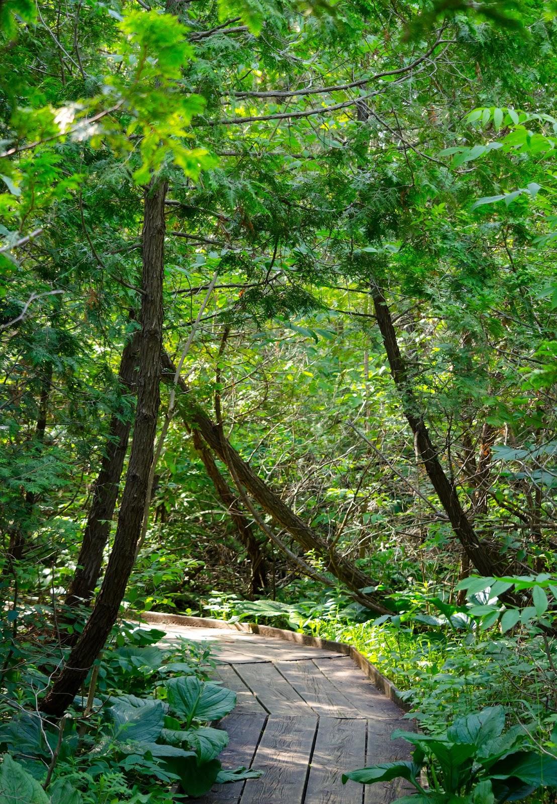 Cedar Bog Ohio