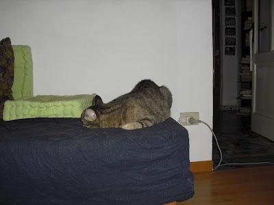 gatto-con-gobba-che-dorme