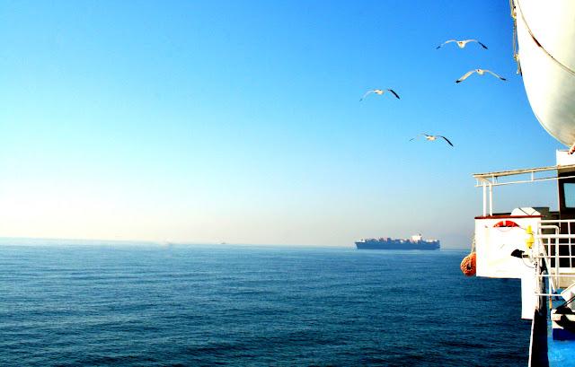mare, acqua, nave, cielo, gabbiani, volatili, uccelli
