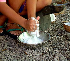extracting of coconut milk from shredded coconut meat