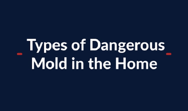 The Most Dangerous Molds in your Homes
