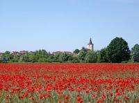 Beelitz mit Mohnfeld