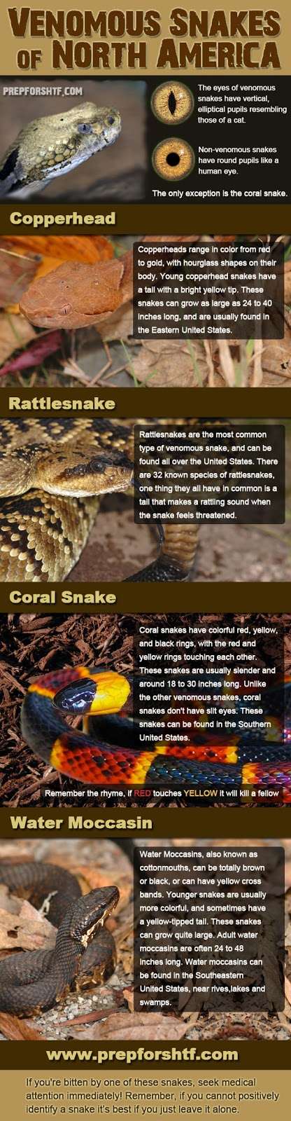 Pissed Off Venomous Snakes of North America!