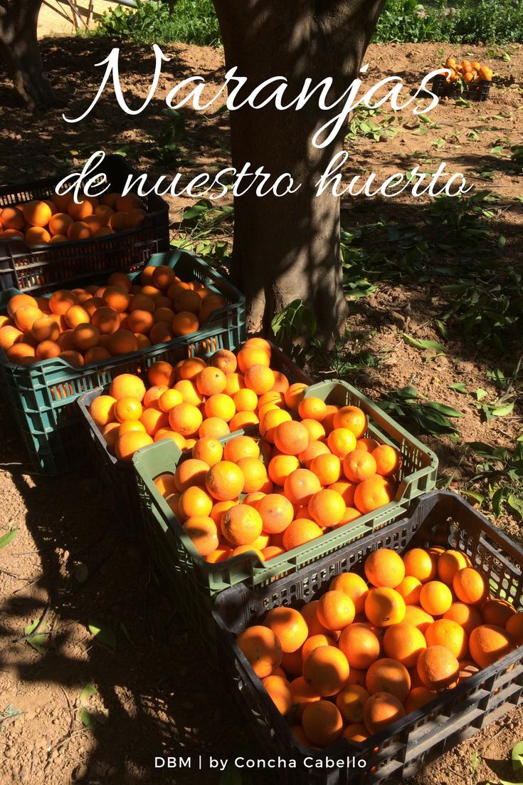 naranjas-nuestro-huerto