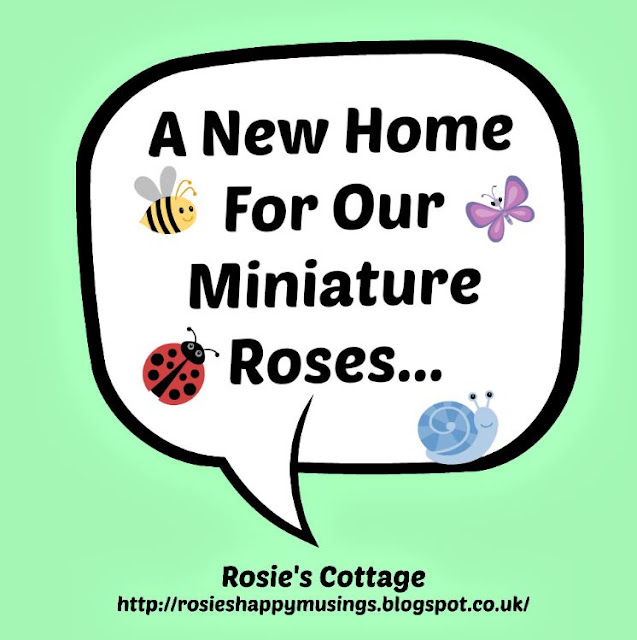 A new home for our miniature roses