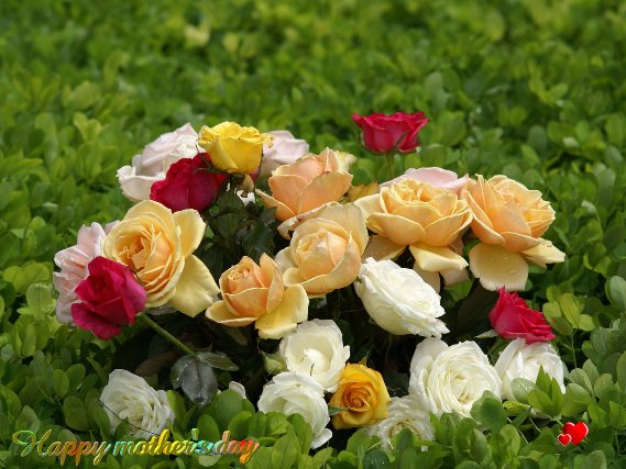 Beautiful Flowers Bouquet Images: 50 Most Beautiful Roses' Bouquet