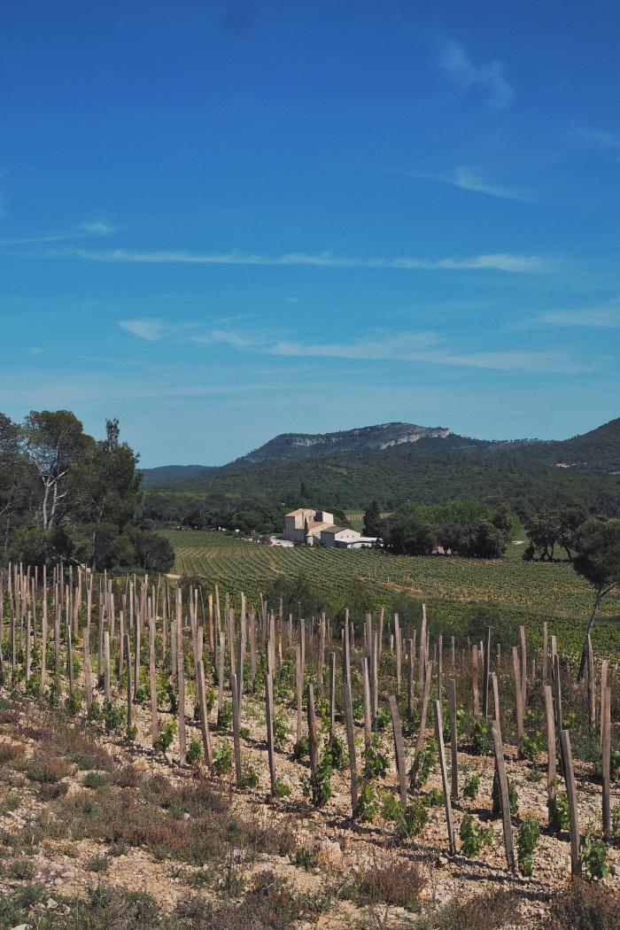 Vignobles du Pic Saint Loup près de Montpellier