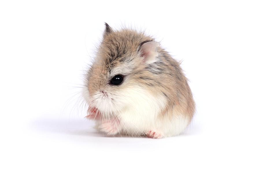 Hamster Talk!: September 2012