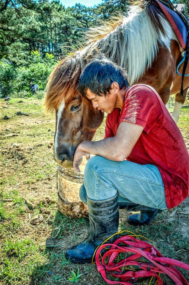 Equine Feeding