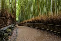 04. Bosque de Bamboo de Arashiyama