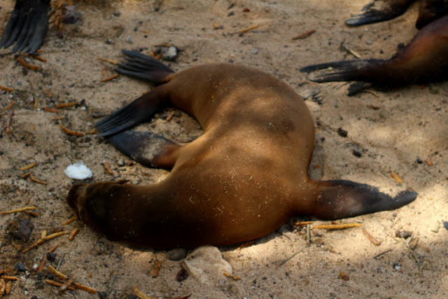 Daytripping in the Galapagos Islands