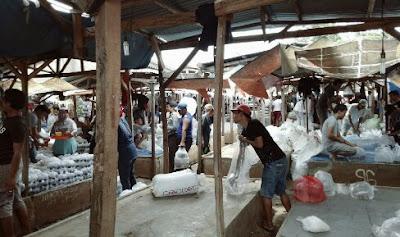 Daftar Alamat Pasar Ikan Hias Di Jakarta