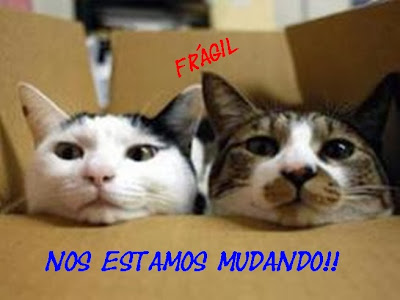 gatos-mudanza-cambio-hogar