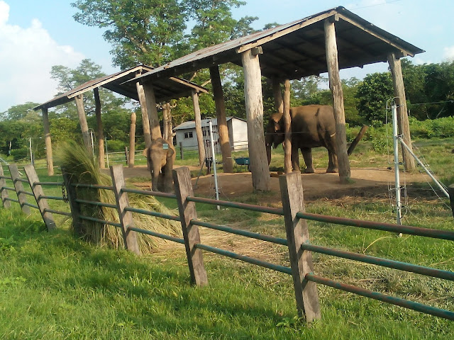 Elephant Breeding center in Chitwan