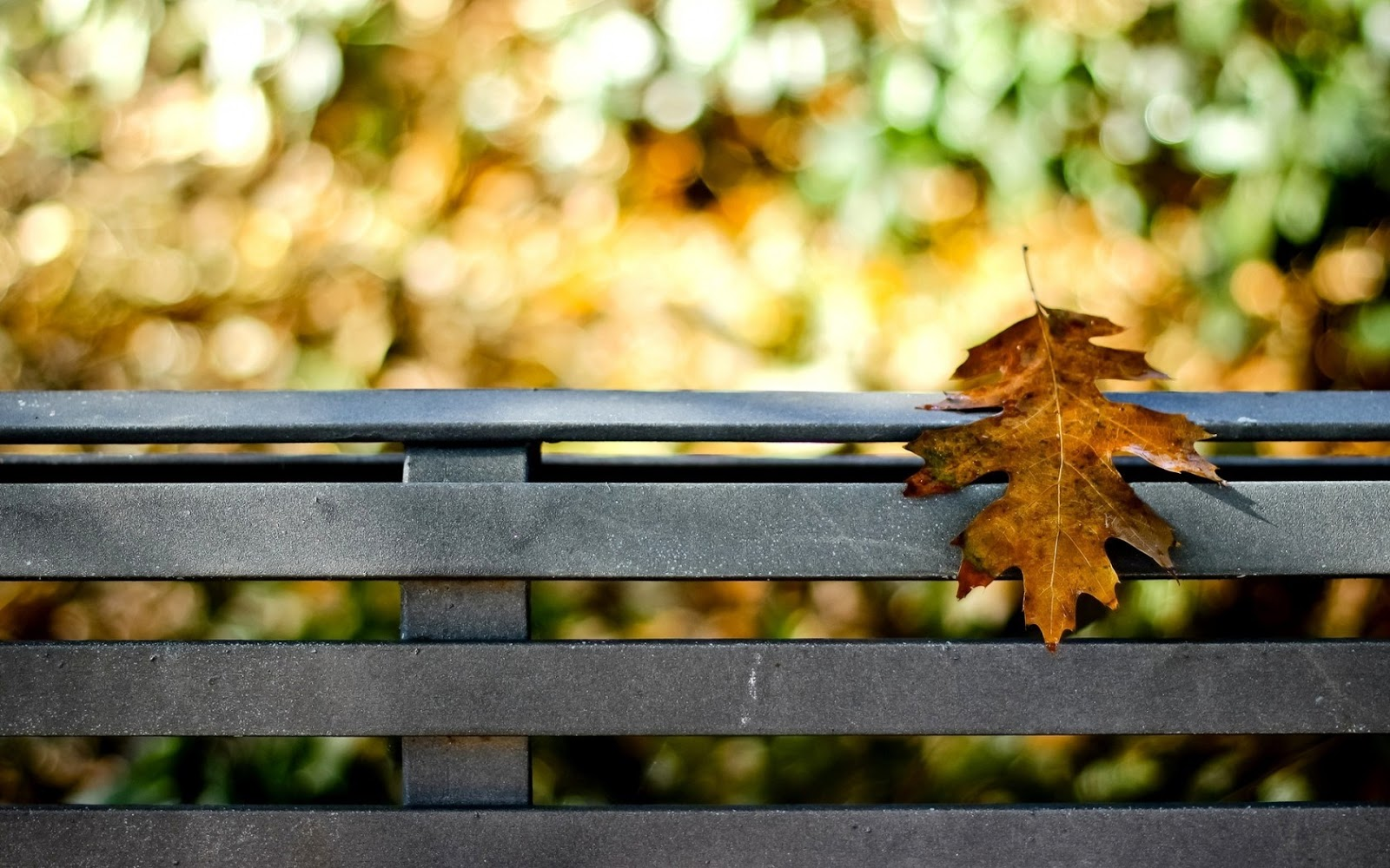 Fall Foliage Desktop Wallpaper صور خلفيات أوراق الشجر جميلة عالية الدقة مداد الجليد