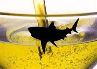 minyak ikan hiu