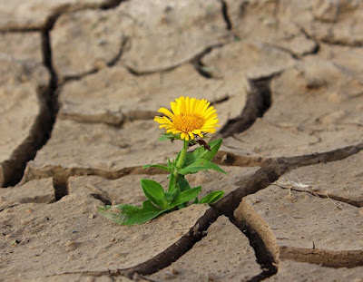 flower poking up through cracked earth