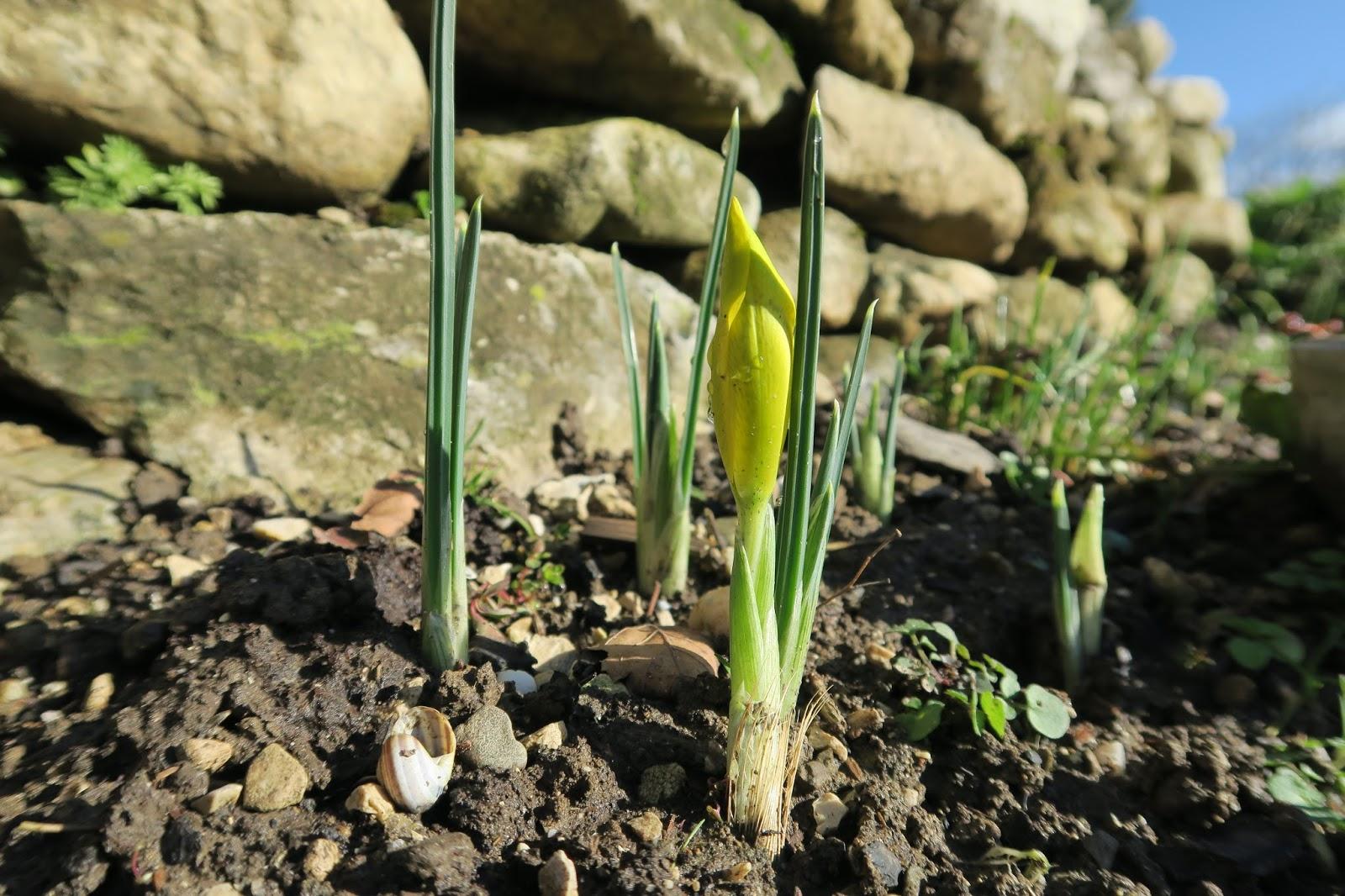 Der Garten Im Februar jura garten februar garten