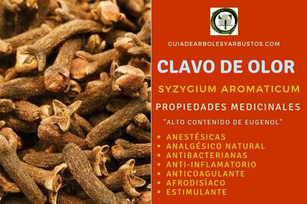 Las propiedades que tiene el clavo de olor: es un analgésico natural, estimulante, anticoagulante, etc