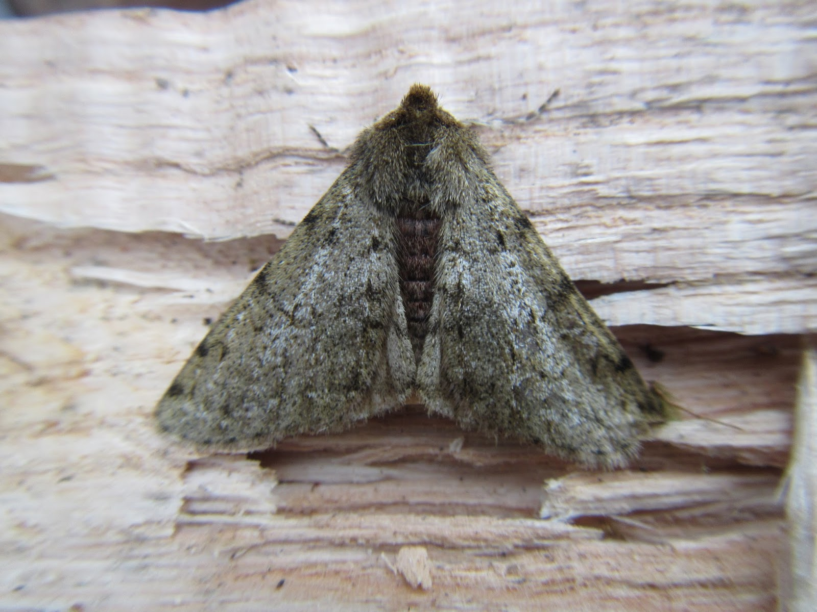 Why Are There Moths In My House Winter Plan 2017