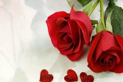 Ide Dekorasi Gambar Bunga Mawar Yang Romantis Terlihat Keren
