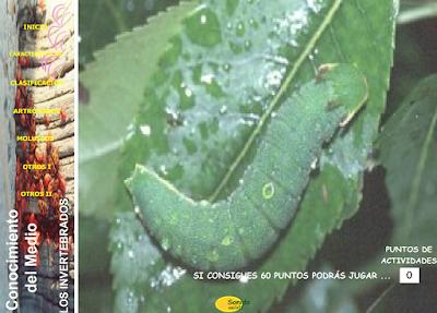 http://ceiploreto.es/sugerencias/juntadeandalucia/la_tierra/invertebrados/indexinvertebrados.html