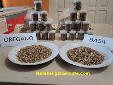 Oregano dan Basil