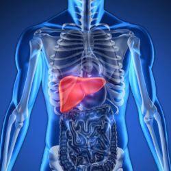 Câncer de fígado:  droga experimental protege sistema imunológico