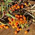 Gyógynövények őszi fegyvertárunkban