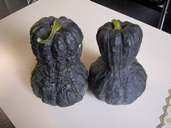 two black squash with long rounded shapes that taper in the middle sitting on a table