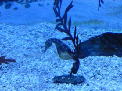 visite aquarium de Busan Corée du Sud