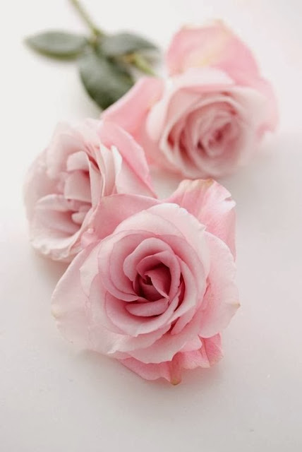 Pink Roses - Cool Chic Style Fashion