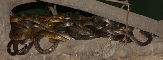 14-Katraj-Snake-Park