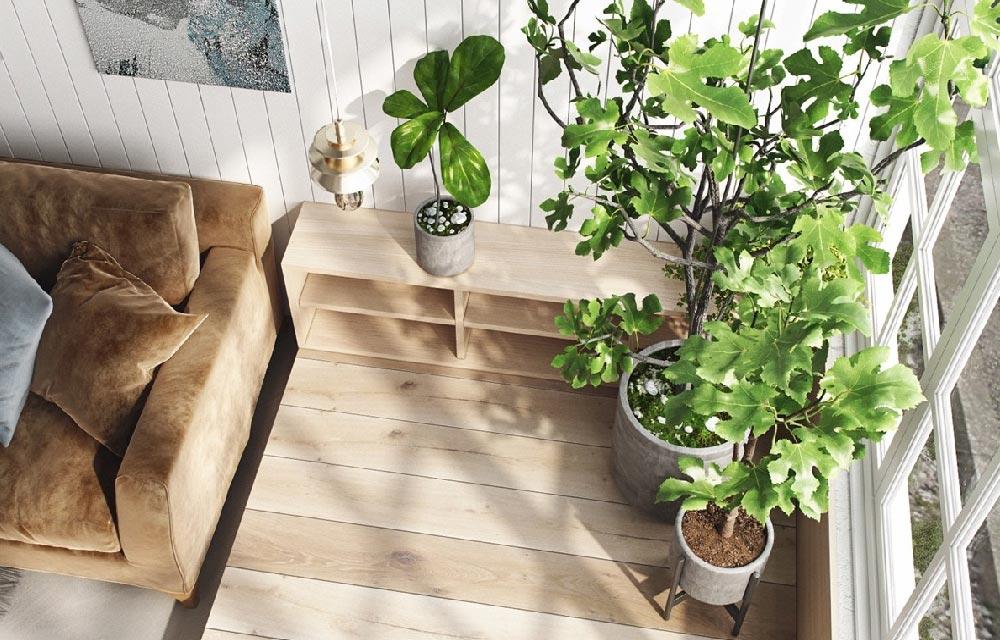 Ottobre le piante rientrano in casa blog di arredamento - Piante che purificano l aria in camera da letto ...
