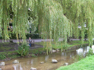 weeping willow salix over the village pond